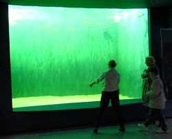 Aquarium Dubuisson